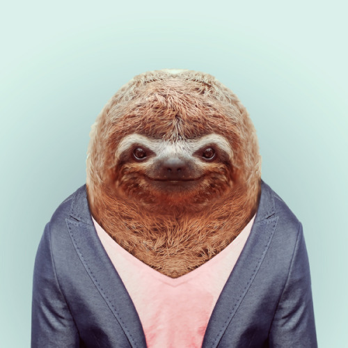 SLOTH by Yago Partal for ZOO PORTRAITS