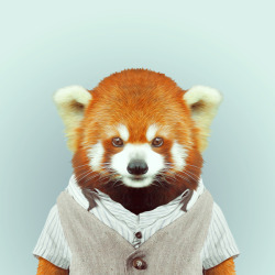 RED PANDA por Yago Partal para ZOO RETRATOS