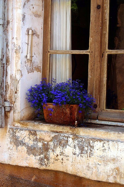 Blue lobelia in a terracota pot on a window sill in Bonnieux, France