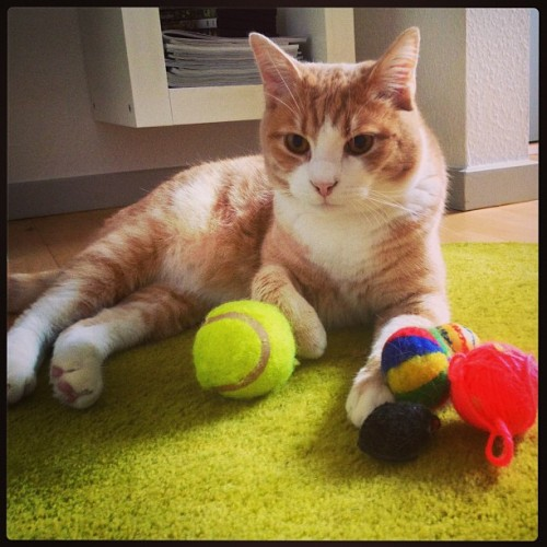 thefluffingtonpost:</p> <p>PHOTO OP: All the Toys<br /> Via thecatjeremy.