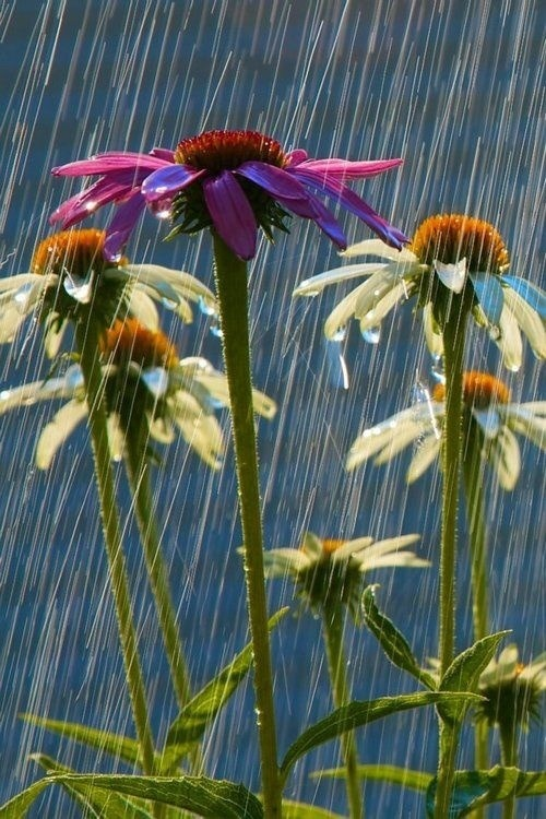 flowersgardenlove:</p> <p>. Beautiful gorgeous pretty flowers</p> <p>The rain won't bring us down.<br /> It will allow us to grow.<br /> Bring on the rain.