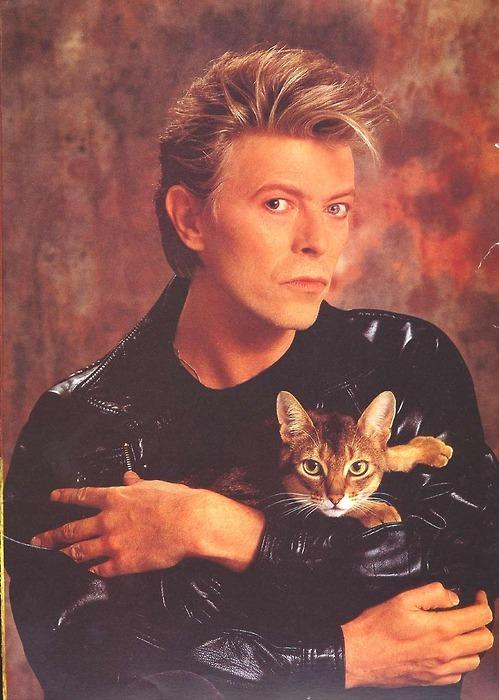 Gatopoder.» David Bowie