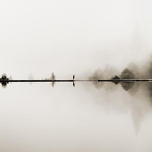 reflecting solitude