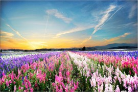 """""""Flower Picture of Bright flowers in field"""""""
