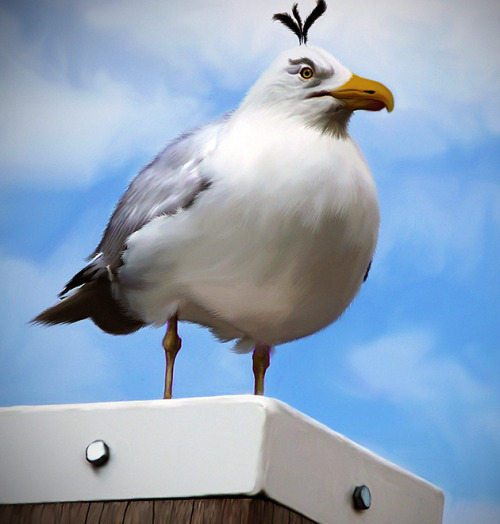 Egg Dropping Bird