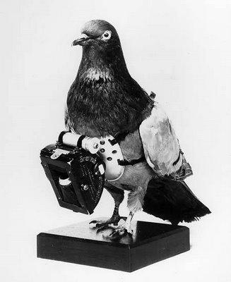 Pigeons are disturbingly erotic.