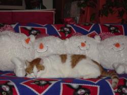 Muffin & 4 Snowballs