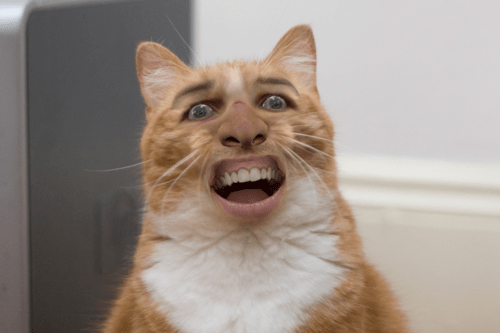 Kitty Cat Nicolas Cage Boo Boo Bahboh •