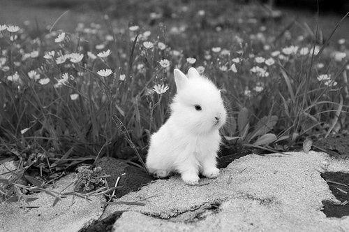 fluffy bunny in front of a grass