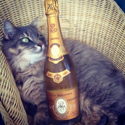 This cat got taste! #cristal #champagne #cat by cvlager