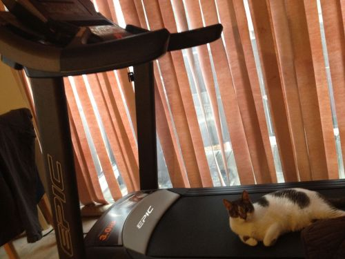 It's treadmill day! Turns out I wasn't the first one to make use of it.
