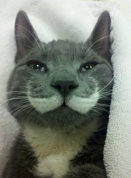 Handlebar Mustache Meme