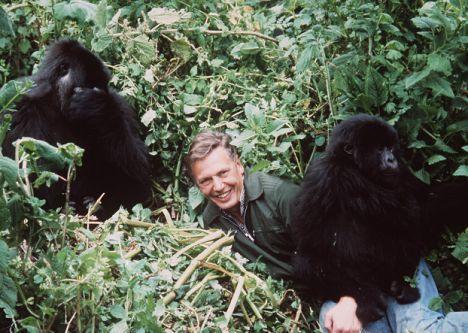 Attenborough, Life on Earth