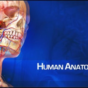 visible-body-3d-anatomy-atlas-v1-1-0-apk
