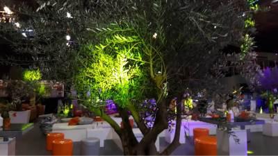 Evenement decoratie, verlichte olijfboom