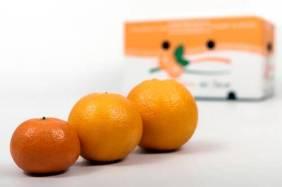 naranjas-valencianas-online-01
