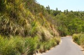 Road downhill to Lake Batur