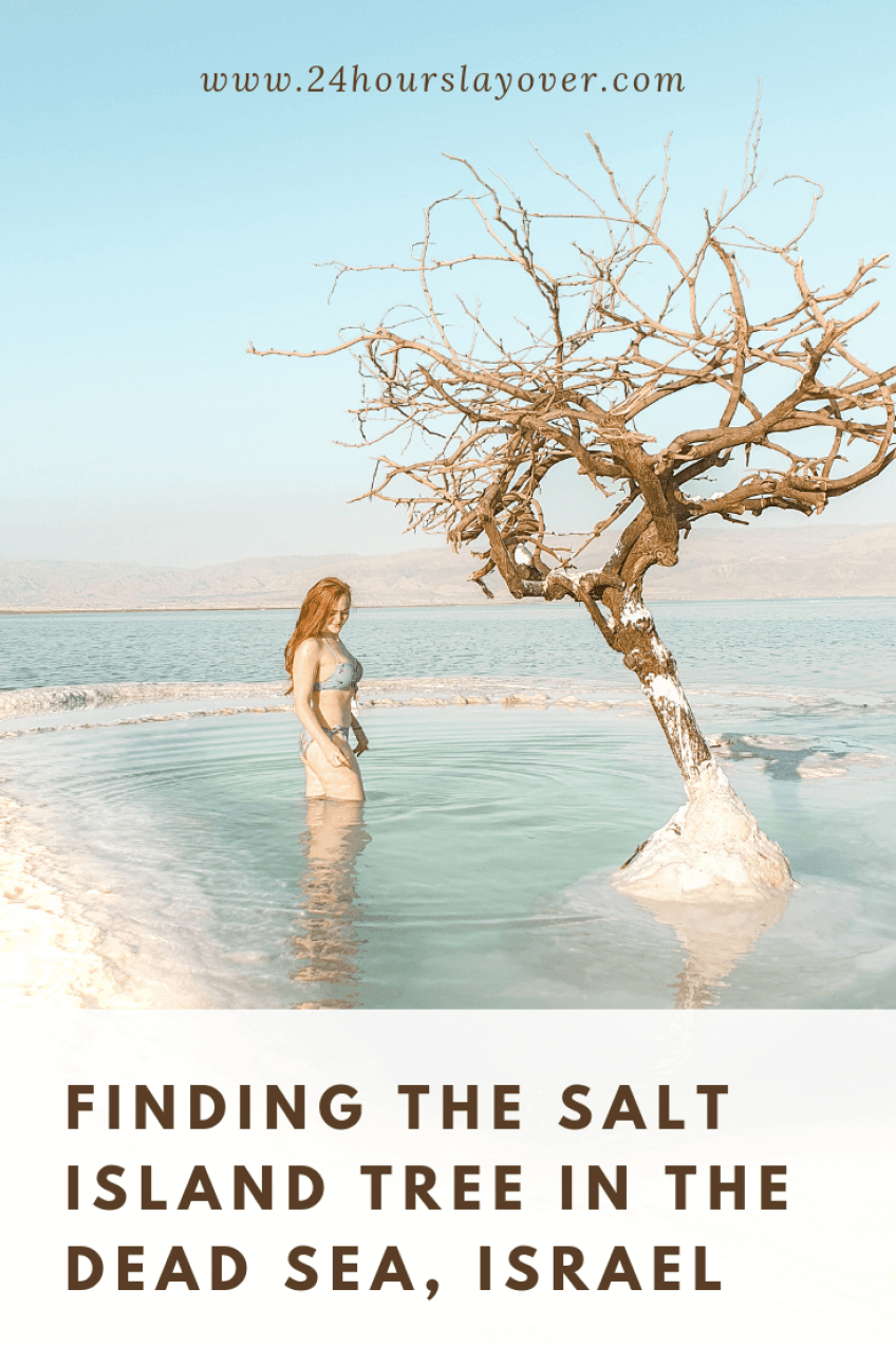 How to find the salt island tree in the Dead Sea, Israel
