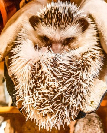 harry hedgehog cafe instagrammable places tokyo
