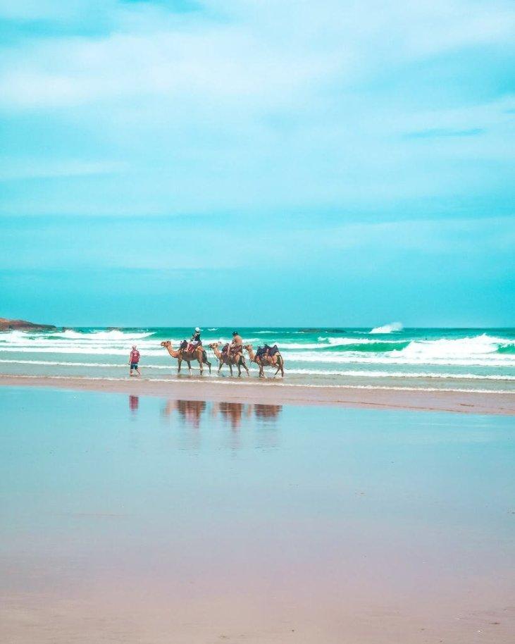 port Stephens camel ride