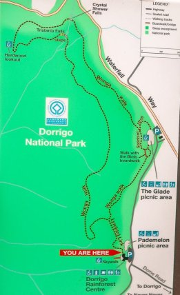 dorrigo national park walks
