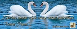 Love has reasons