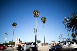 Palmtrees.