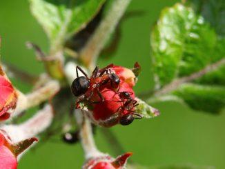 myrer natur blade