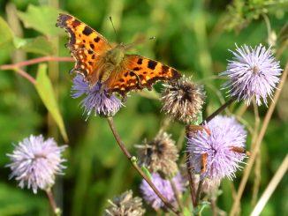 sommerfugl natur haven