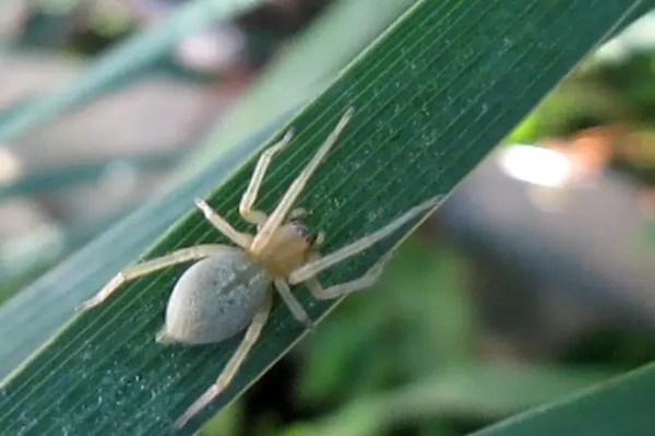Самые опасные пауки - 24СМИ