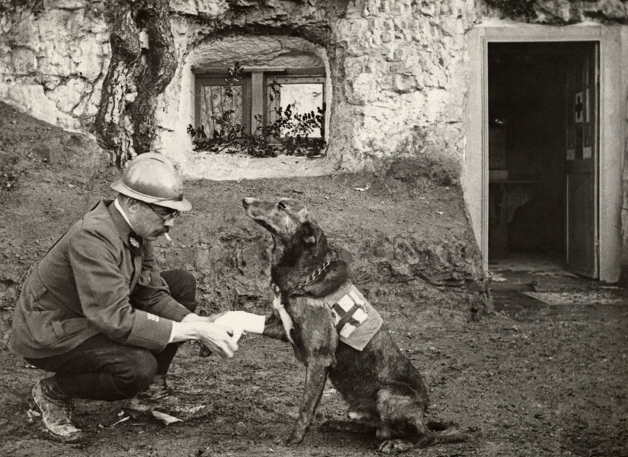 A WWI allied soldier bandages the paw of a Red Cross working dog in Flanders, Belgium, May 1917.<br /> We want to hear your dog stories - how Devoted is your dog? Tell us on National Geographic Your Shot. Photograph by Harriet Chalmers Adams, National Geographic