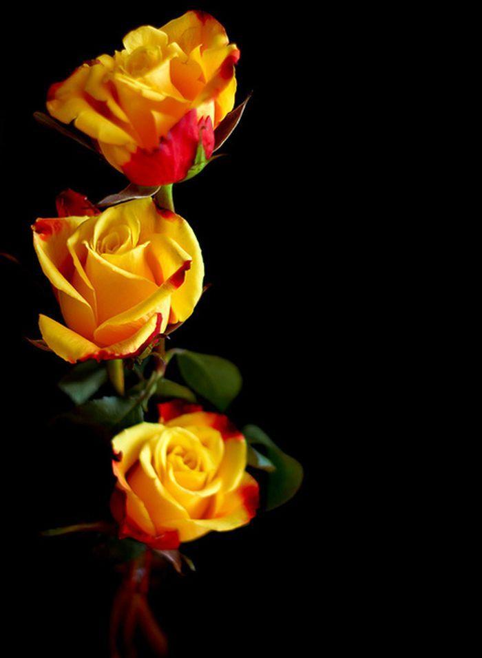 rose per te