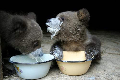 Got Milk? via Imgur :)