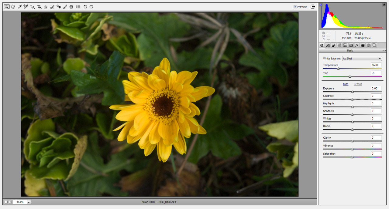 Yellow flower in ACR