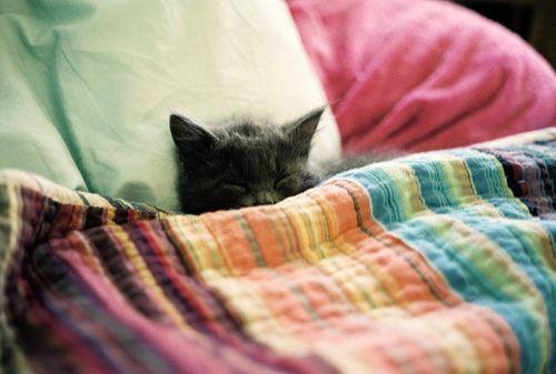 sleepy cat (cat,sleepy,cute,funny,adorable)