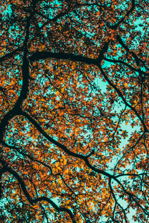 <br /> Looking Up<br /> Stereocolours</p> <p>LOOK UP AT THE SKY.<br /> LOOK AT ALL THE COLORS.<br /> THE BLUE SKY,<br /> THE AUTUMN LEAVES,<br /> THE BRIGHT SUN.<br /> ALL TOO BEAUTIFUL TO MISS.
