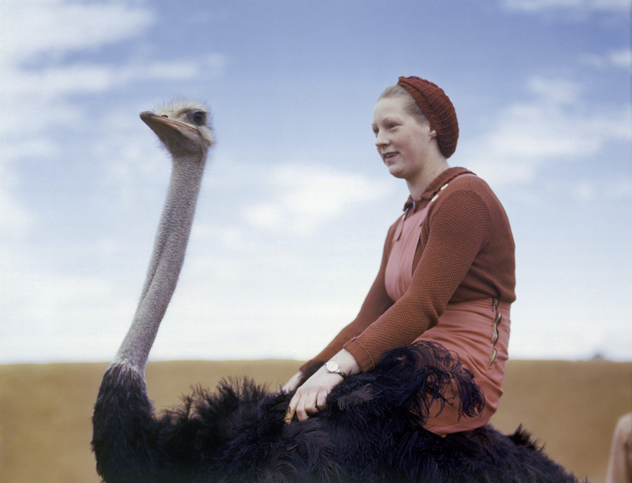 A portrait of a woman riding an ostrich in South Africa, August 1942.Photograph by W. Robert Moore, National Geographic