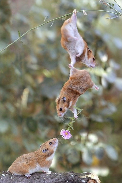 wonderous-world:</p> <p>For You!by KBS Photography</p> <p>LOVE COULD BRING OUT THE BEST<br /> IN PEOPLE AND IN ANIMALS.
