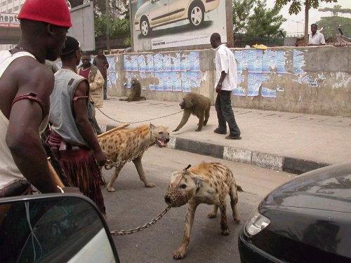 Tener un perro es muy mainstream…Ahora lo más cool es tener una hiena o un mandril.