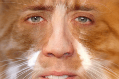 Nicolas-cage-cats • Cage Cat