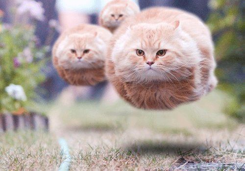 Floating Cats