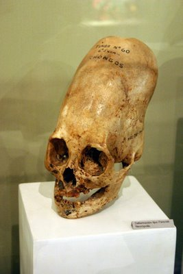 Nazca Skulls