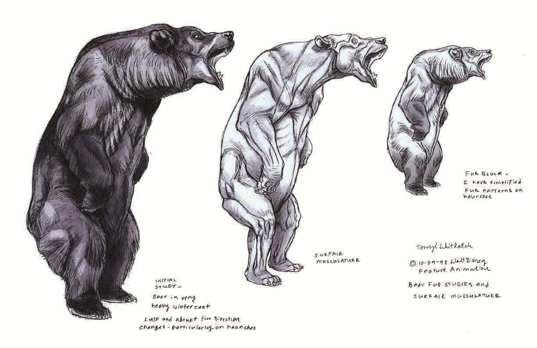 Black Bear Profile Drawing