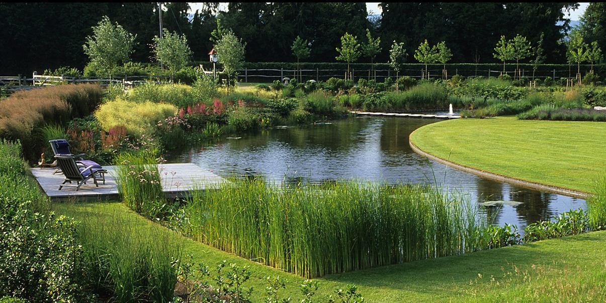 carex: garden design by carolyn mullet on Landscape Pond Design id=16757