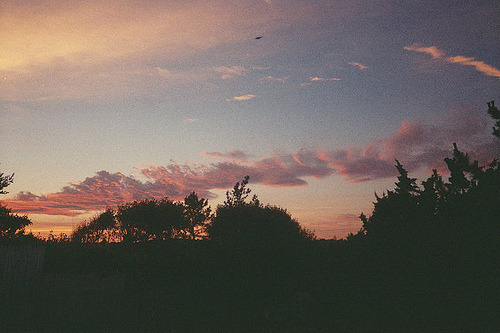 Photography Pretty Beautiful Sky Hipster Vintage Trees