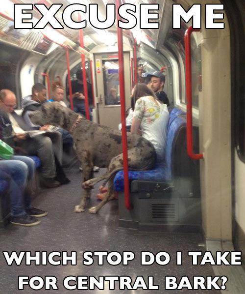 pleatedjeans: subway dog   pic via