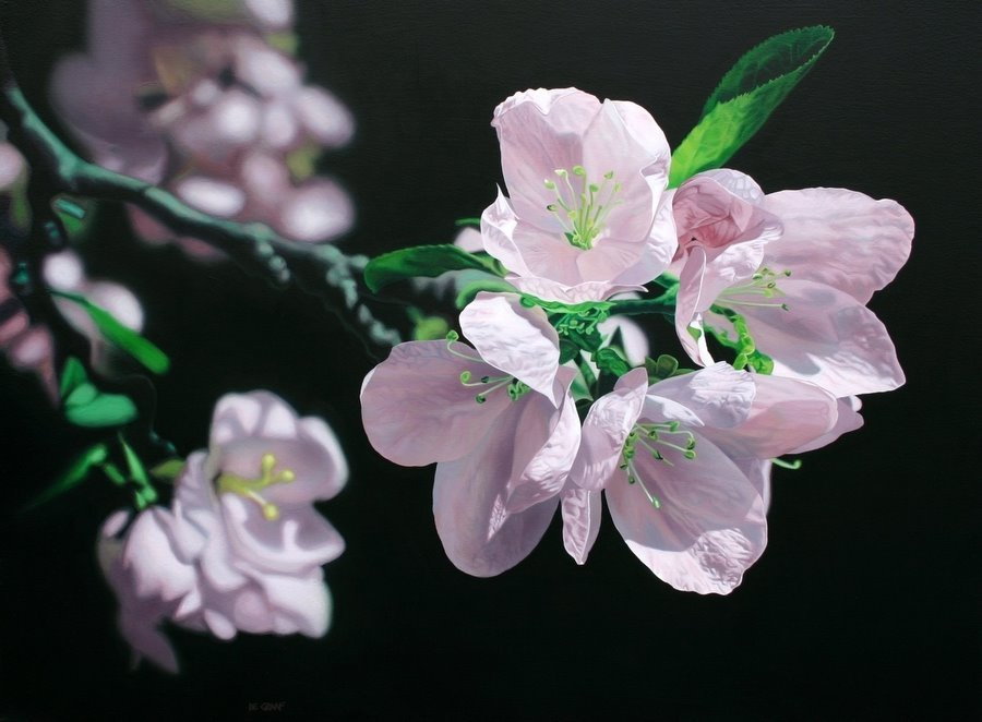 Apple Blossoms by Jason De Graaf
