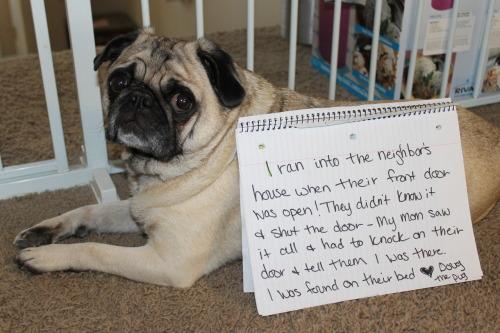 Break and enter pug!