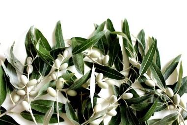 olive leaf extract, olive leaf