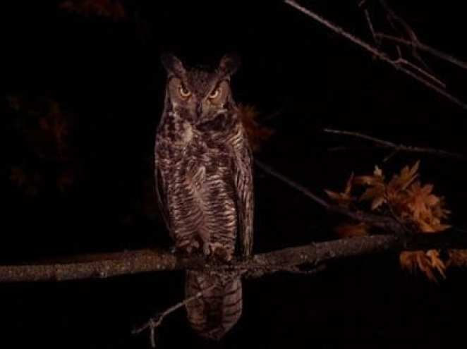 A great owl sits on a branch